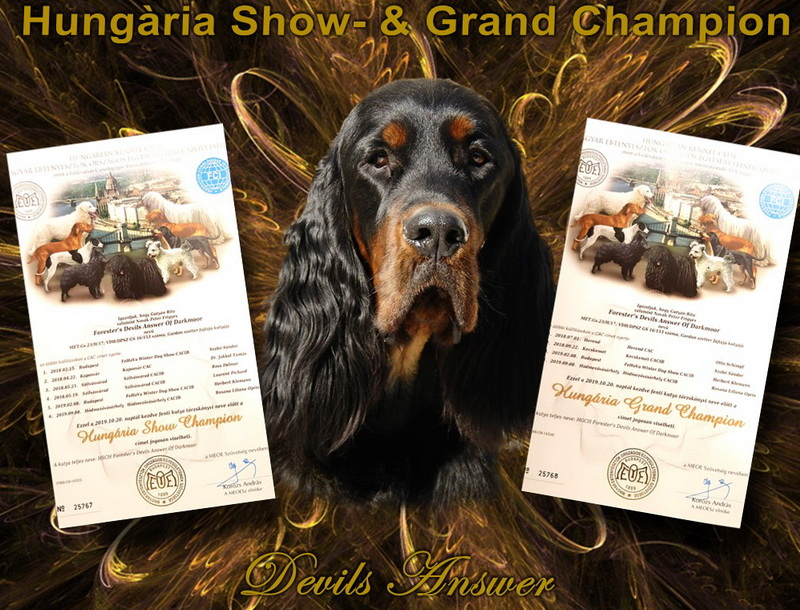 gordon-setter-zucht-foresters-of-darkmoor-hungaria